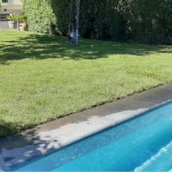 piscine + jardin